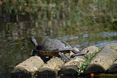 Lovely Lavender - Turtle on a Raft by Linda Kerkau