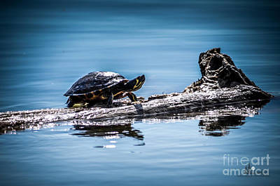 Photograph - Turtle On Log by Ronald Grogan