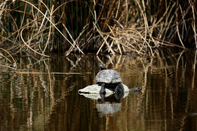 Nature Center Pond Photograph - Turtle On Turtle by Ernie Echols