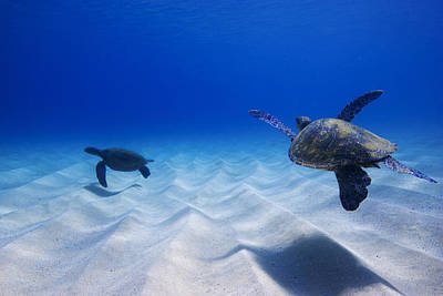 Hawaii Sea Turtle Photograph - Turtle Pair by Sean Davey