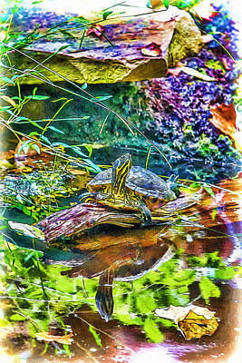 Mixed Media - Turtle Pond Fall by John Haldane