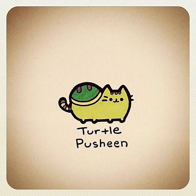 Reptiles Wall Art - Photograph - Turtle Pusheen by Turtle Wayne