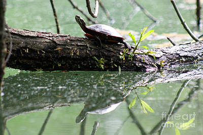 Photograph - Turtle Reflection by Deb Kline