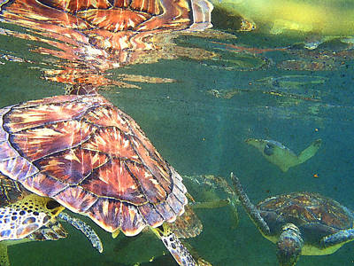 Reptiles Royalty-Free and Rights-Managed Images - Turtle reflections by Carey Chen