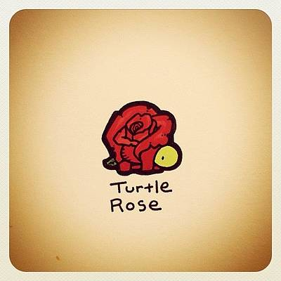 Reptiles Wall Art - Photograph - Turtle Rose by Turtle Wayne