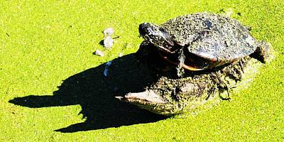 Photograph - Turtle Shadow by Todd Sherlock