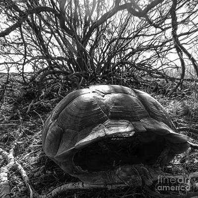 Turtle Shell Art Print by Lovejoy Creations