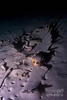 Turtle Skeleton Cave Art Print by Soren Egeberg