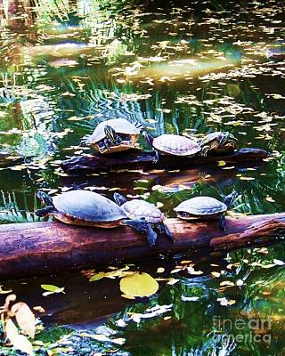 Slider Photograph - Turtle Soup by Chuck  Hicks