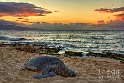 Hawaii Sea Turtle Digital Art - Turtle Sunset by James Anderson