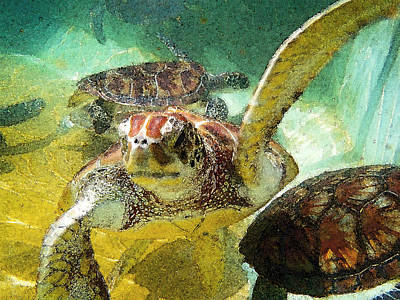 Reptiles Royalty-Free and Rights-Managed Images - Turtle Swim by Carey Chen