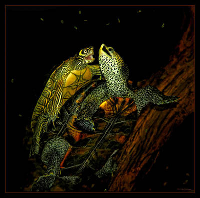 Photograph - Turtle Tango by Lucy VanSwearingen