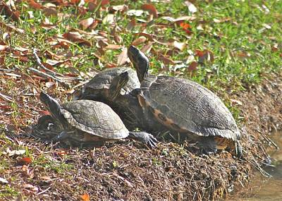 Photograph - Turtle Time by Jeanne Kay Juhos