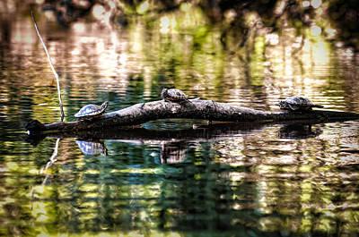Photograph - Turtle Time by Scott Hansen
