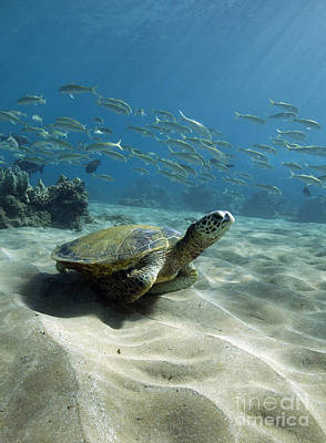 Photograph - Turtle Town Maui by David Olsen