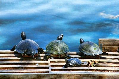 Photograph - Turtle Turtle Turtle Tiny Turtle By Diana Sainz by Diana Raquel Sainz