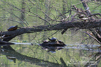 Photograph - Turtles 20120419_173a by Tina Hopkins