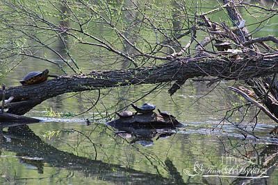 Photograph - Turtles 20120419_173a by Tina Hopkins