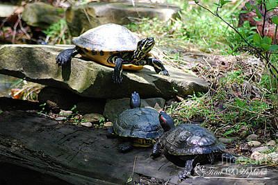 Photograph - Turtles 20120506_17 by Tina Hopkins