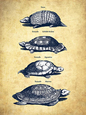 Reptiles Digital Art - Turtles - Historiae Naturalis - 1657 - Vintage by Aged Pixel