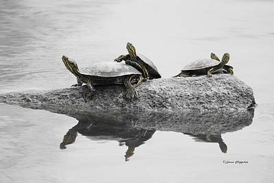 Turtles Art Print by Steven Clipperton