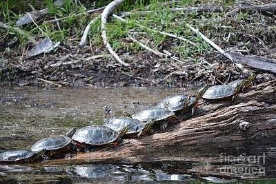 Turtles Print by Terrance Byrd
