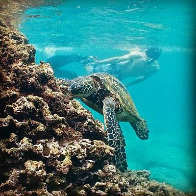 Reptiles Wall Art - Photograph - #turtles #turtle #honu #hawaiistagram by Brian Governale