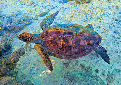 Photograph - Turtle's Visit by Dorothy Cunningham
