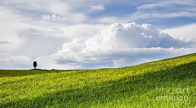 Landscape Photograph - Tuscan Fields by Yuri Santin
