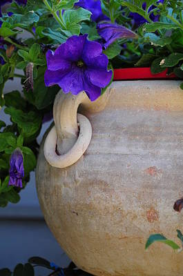 Photograph - Tuscan Pot by Susie Rieple