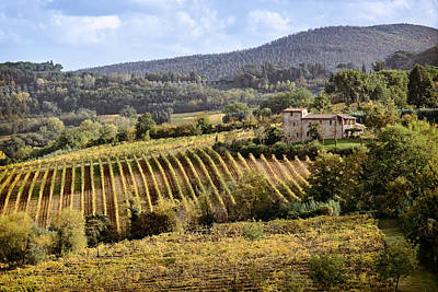 Vineyard Photograph - Tuscan Valley by Dave Bowman