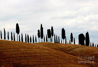 Photograph - Tuscany Hill by Arie Arik Chen