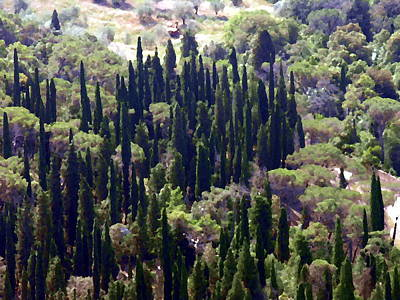 Photograph - Tuscany Italy - Cypress Trees by Jacqueline M Lewis