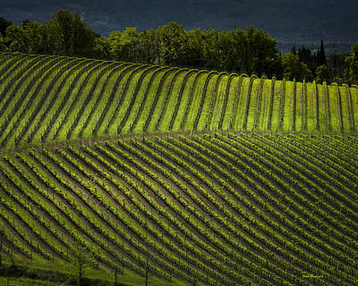 Photograph - Tuscany Vineyard Series 3 by John Pagliuca