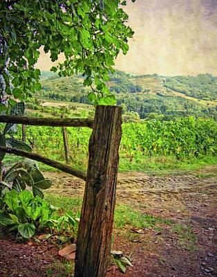 Photograph - Tuscany Vinyard by Sandra Selle Rodriguez