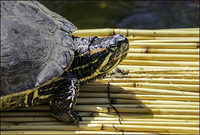 Reno Photograph - Tutle On Raft by LeeAnn McLaneGoetz McLaneGoetzStudioLLCcom