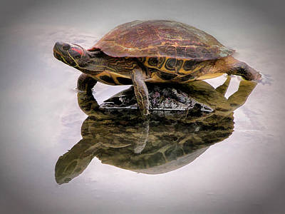 Photograph - Turtle Balancing On Rock by Gary Slawsky