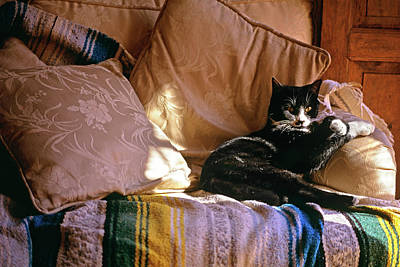Puss Photograph - Tuxedo Cat Sitting On Sofa In San by Vintage Images
