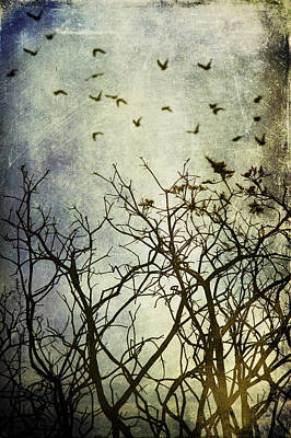 Pyrography - Twigs And Birds With Textures by Ethiriel  Photography