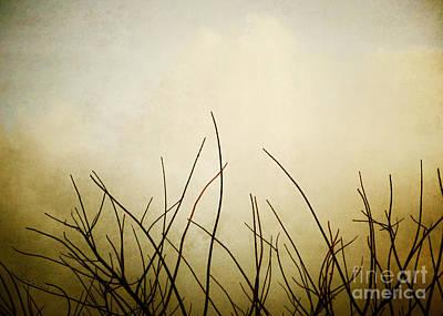 Darla Photograph - Twigs by Darla Wood