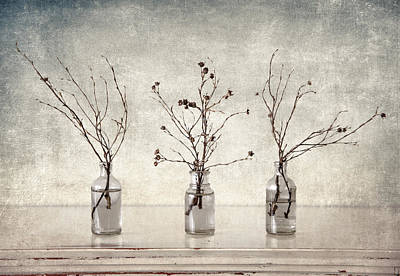 Photograph - Twigs In Bottles by Carol Leigh