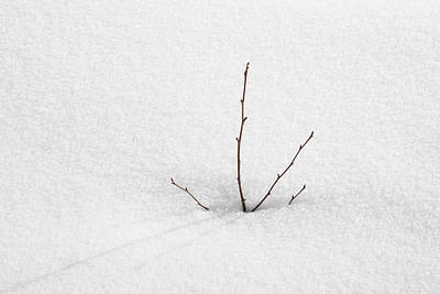 Photograph - Twigs In The Snow - Minimalist Winter Image by Matthias Hauser