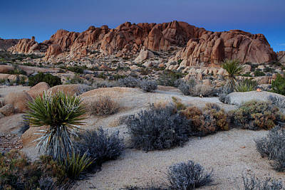 Photograph - Twilight At Joshua Tree by Eric Foltz