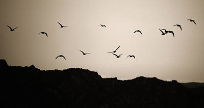 Photograph - Twilight Geese by Marilyn Hunt