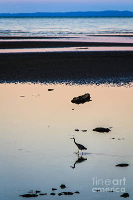 Photograph - Twilight Heron by Silken Photography