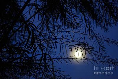 Photograph - Twilight Moon by Kerri Mortenson