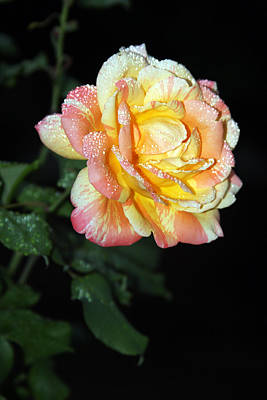 Photograph - Twilight Rose by Vadim Levin
