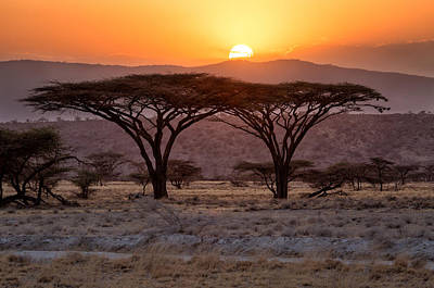 Photograph - Twin Acacias In Samburu by June Jacobsen