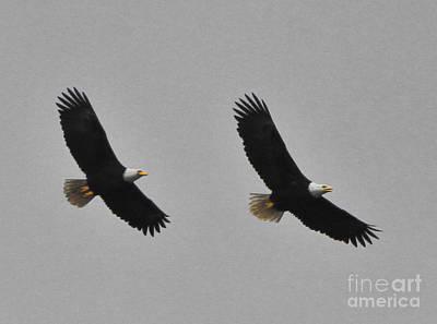 Twin Eagles In Flight Art Print
