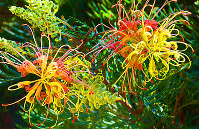 Photograph - Twin Grevilleas by Margaret Saheed